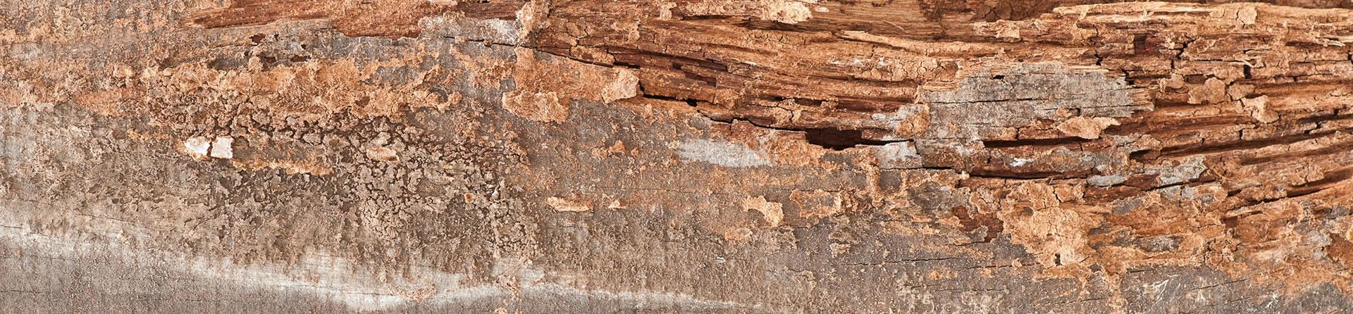Termite Damage Repair in Sacramento