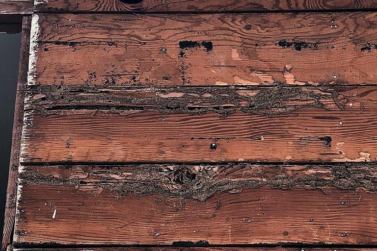 Termite Damage Repair Sacramento
